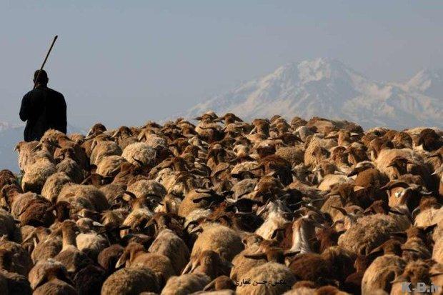 کوچ پاییزه ۱۲ هزار خانوار عشایری/ همنورد افقهای دور باید شد