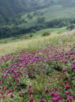 مرکز نوآوری گیاهان داروئی درجهاد دانشگاهی یاسوج راه اندازی می شود