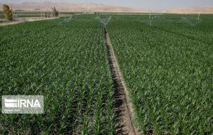 ۴۰ درصد مزارع آبی کهگیلویه و بویراحمد به سامانه آبیاری نوین تجهیز شد