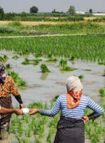 کشت محصولات با مصرف بالای آب در کهگیلویه و بویراحمد محدود شد