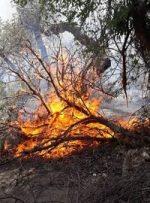 آتشسوزیهای کهگیلویه و بویراحمد عمدی یا سهوی است؟ادامه سریالی آتشسوزیها