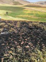 ۶۰۰هکتار مزارع گندم خاکستر شد/آتشی که خشک و تر را باهم میسوزاند