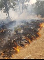 جنگل های کوه حاتم بهمئی همچنان در آتش می سوزد