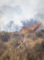 زبانه های های آتش در میان درختان و مراتع شبلیز دنا همچنان شعله ور است