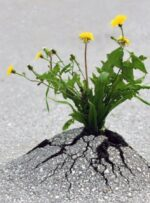 پروژه ی ناموفق / گچساران،اینجا درخت یا بوته رشد نمی کند
